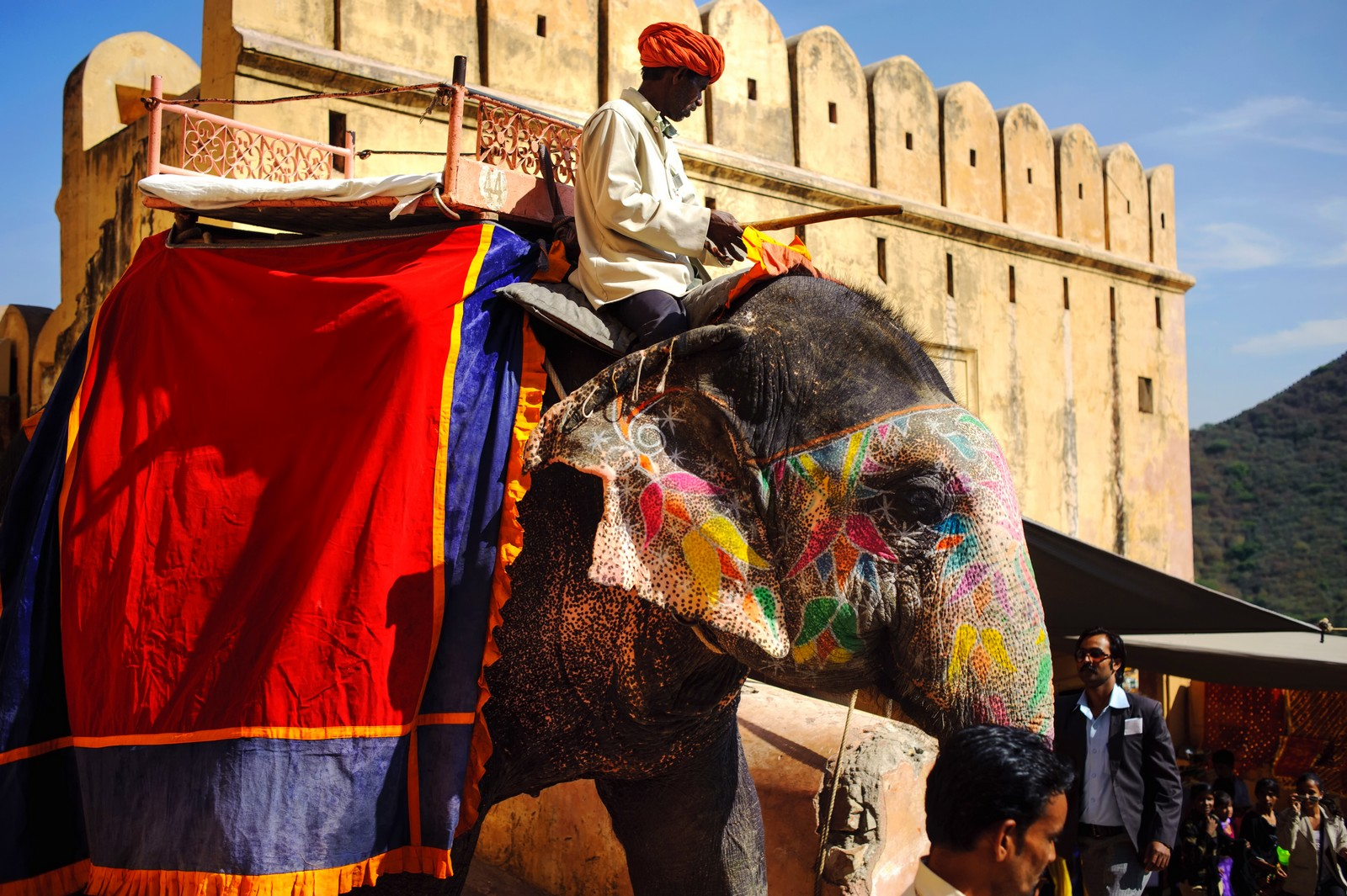 Jaipur indian elephant